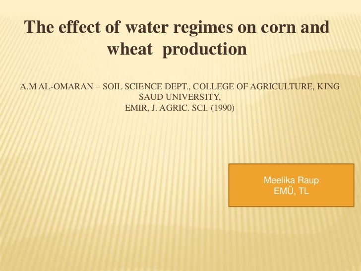 The effect of water regimes on corn and           wheat productionA.M AL-OMARAN – SOIL SCIENCE DEPT., COLLEGE OF AGRICULTU...
