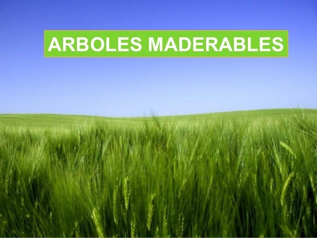 ARBOLES MADERABLES                Page 1