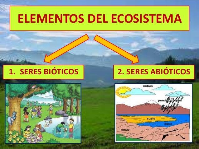 El ecosistema explicado para nios