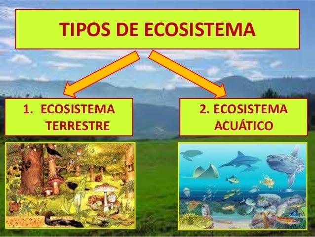 El ecosistema explicado para niños
