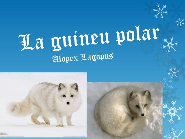 Com és la guineu polar? La guineu polar té el ulls grans i de color marró generalment, o blaus, verds... Tenen les dents b...