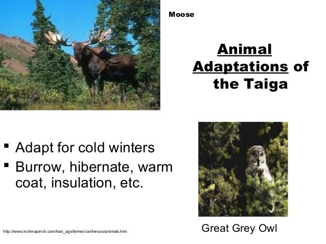 Adaptive features of animals in tropical rainforest