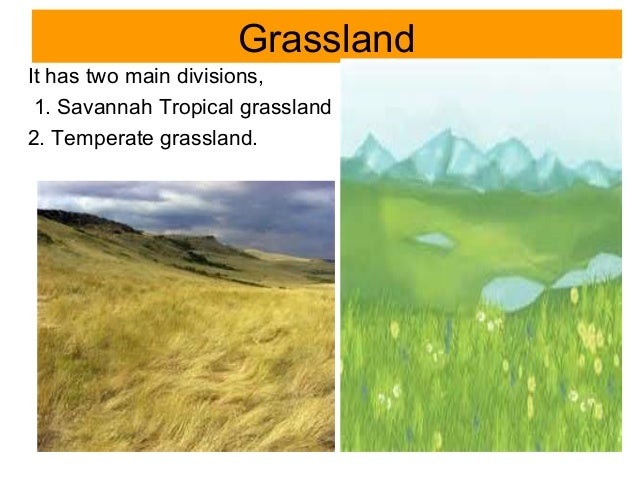 Biomes of the World - Grasslands