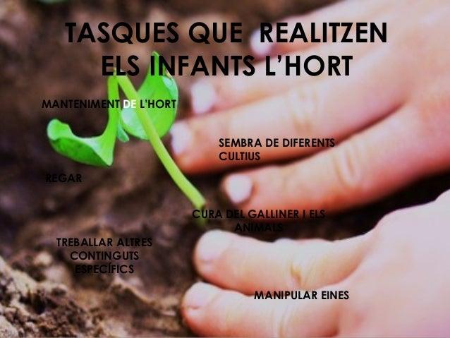 TASQUES QUE REALITZEN ELS INFANTS L'HORT MANTENIMENT DE L'HORT SEMBRA DE DIFERENTS CULTIUS REGAR CURA DEL GALLINER I ELS A...
