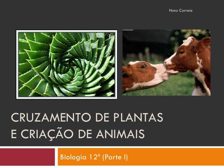 Nuno Correia     CRUZAMENTO DE PLANTAS E CRIAÇÃO DE ANIMAIS       Biologia 12º (Parte I)
