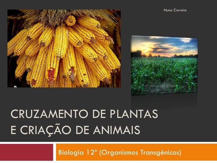 Nuno Correia     CRUZAMENTO DE PLANTAS E CRIAÇÃO DE ANIMAIS       Biologia 12º (Organismos Transgénicos)