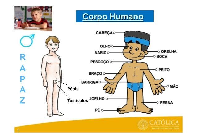 8PénisTestículosCorpo HumanoCorpo Humano