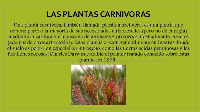 Plantas carnivoras - Cosas sobre las plantas ...