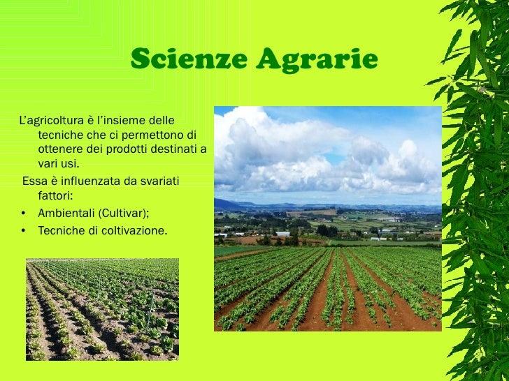 Scienze Agrarie <ul><li>L'agricoltura è l'insieme delle tecniche che ci permettono di ottenere dei prodotti destinati a va...