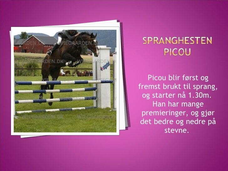 <ul><li>Picou blir først og fremst brukt til sprang, og starter nå 1.30m.  </li></ul><ul><li>Han har mange premieringer, o...
