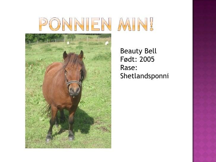 Beauty Bell Født: 2005 Rase: Shetlandsponni