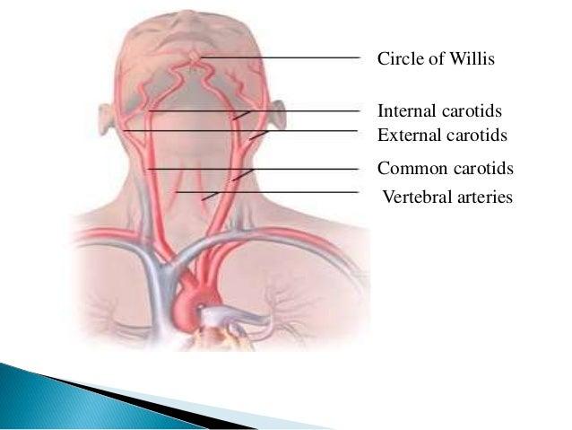 " Mechanisms aiding venous return to the  heart:  ◦ Sympathetic venous tone  ◦ Skeletal muscle pumping or ""milking"" combin..."