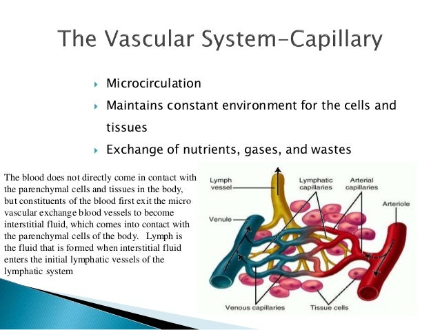  Consists of formed elements (cells)  suspended & carried in plasma (fluid part)   Total blood volume: 60-80 mL/kg of bo...
