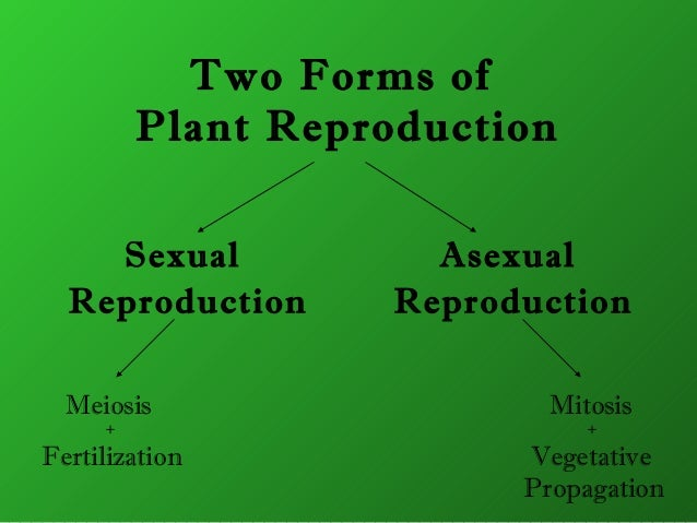 Plants asexual reproduction ppt