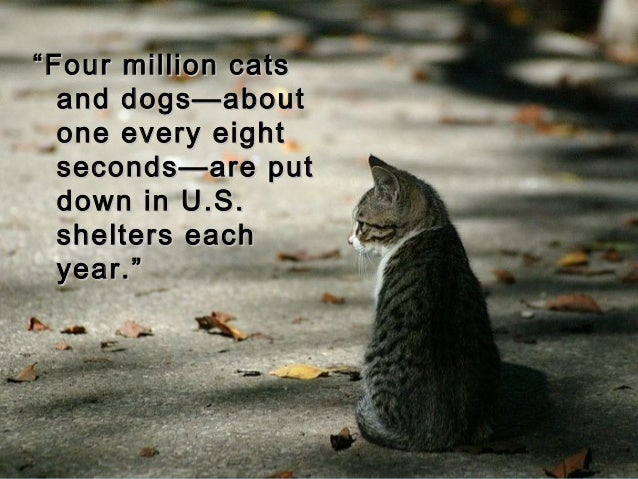 """""""""""Four million catsFour million cats and dogs—aboutand dogs—about one every eightone every eight seconds—are putseconds—ar..."""