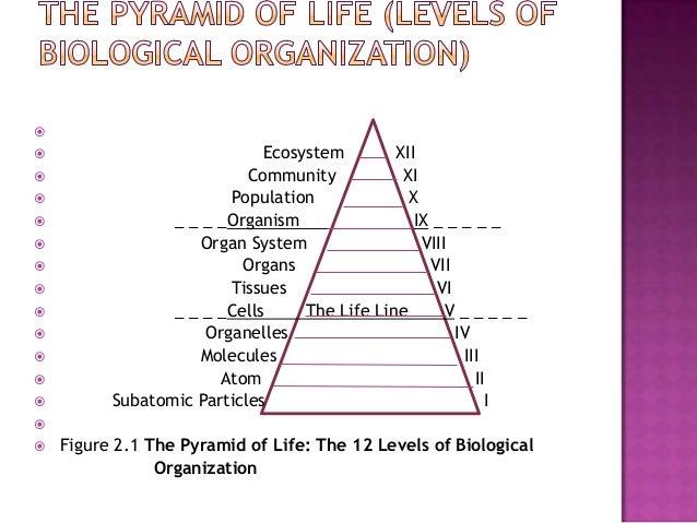 Organization of communities and ecosystem