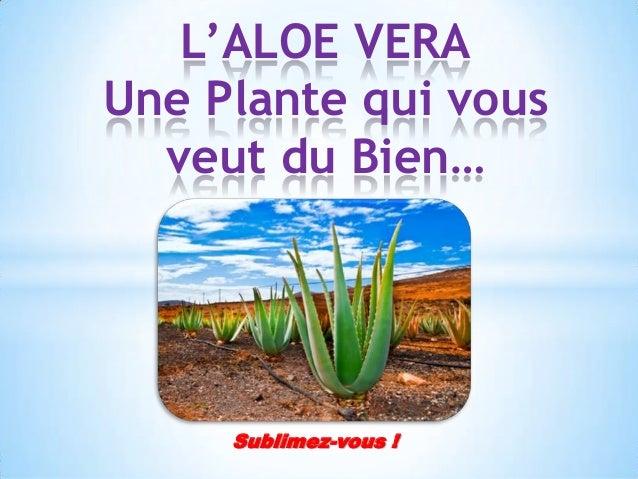 L'ALOE VERA Une Plante qui vous veut du Bien…  Sublimez-vous !