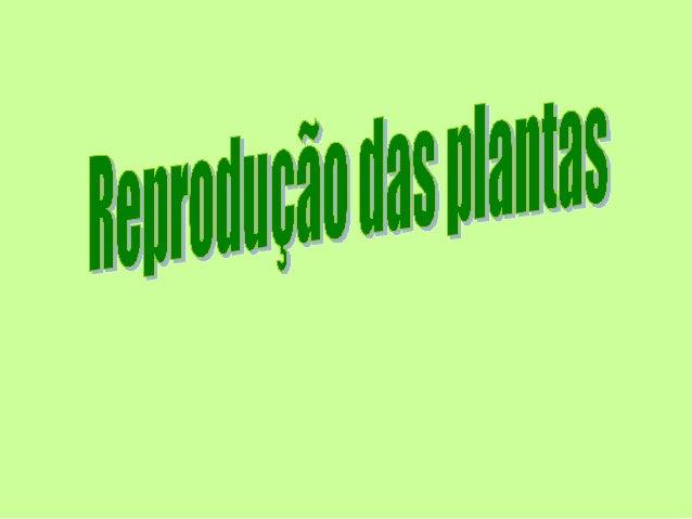 SOBRE A PLANTA As plantas e os seres humanos possuem as mesmas necessidades como seres vivos. Necessitam de: • Água • Ar •...