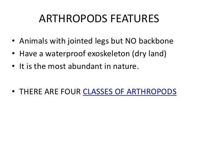 Image of: Diversity Unacademy Powerpoint Animal Kingdom Summary