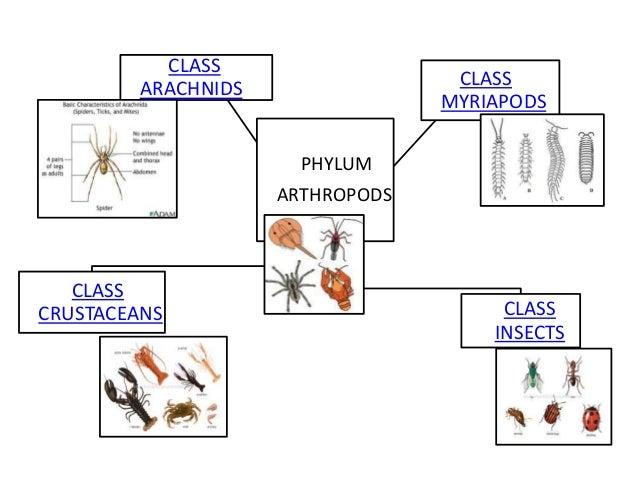 classifyig arthropods