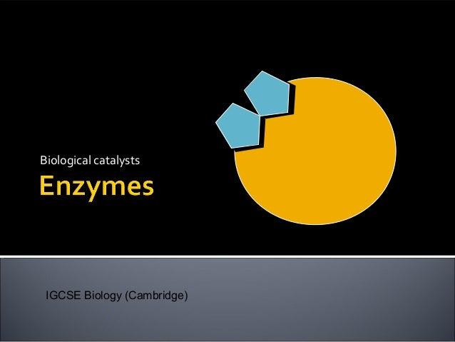 Biological catalystsIGCSE Biology (Cambridge)