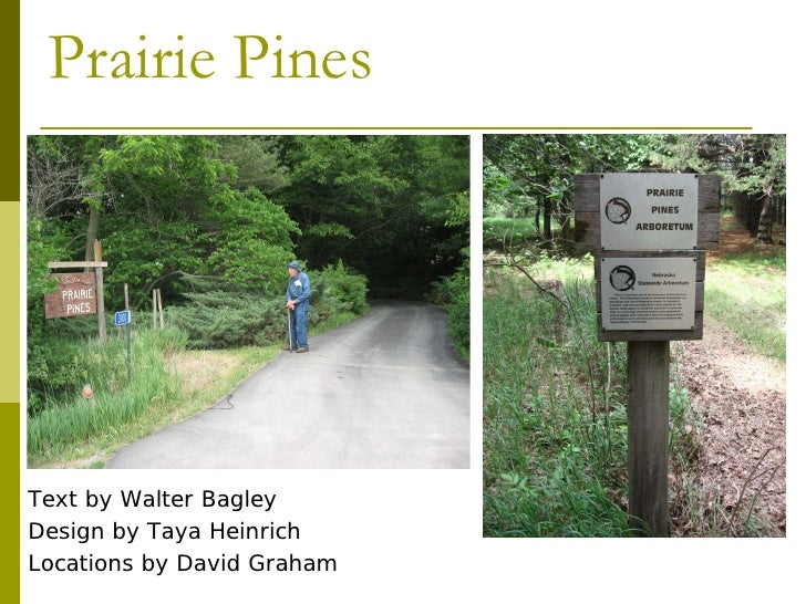Prairie Pines     Text by Walter Bagley Design by Taya Heinrich Locations by David Graham