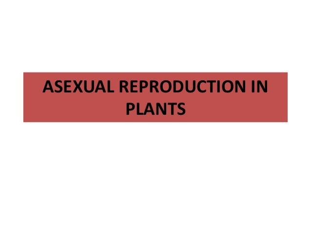 Asexual reproduction in plants ks2 english