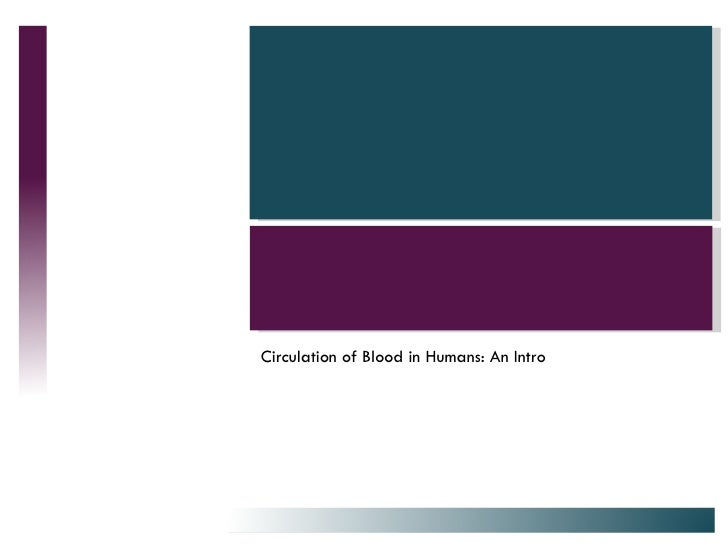 Circulation of Blood in Humans: An Intro