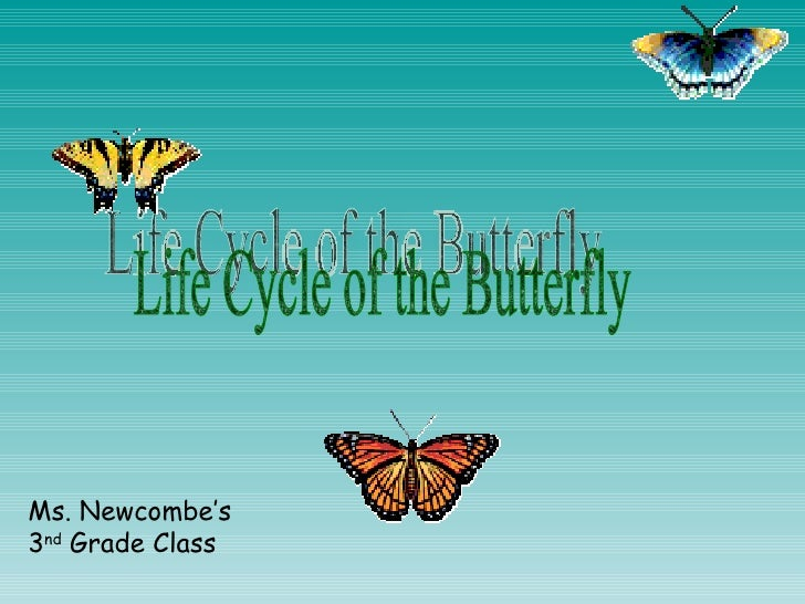 Life Cycle of the Butterfly Ms. Newcombe's  3 nd  Grade Class