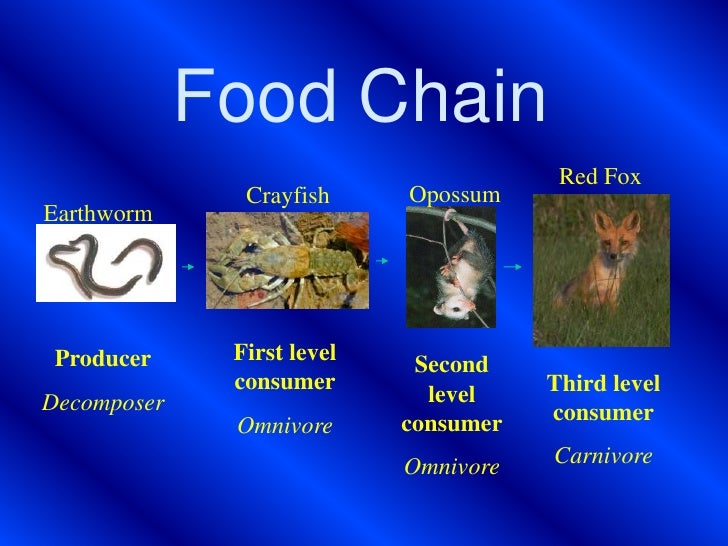 decomposer animals