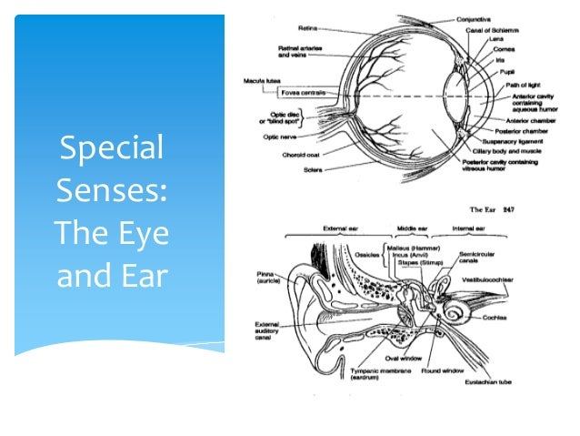 Module Eye And Ear on Eye Muscles Diagram