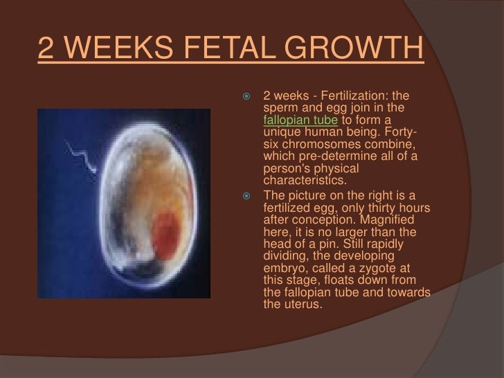 Fetal Development And The Three Stages Of Labor Delivery By Sandr