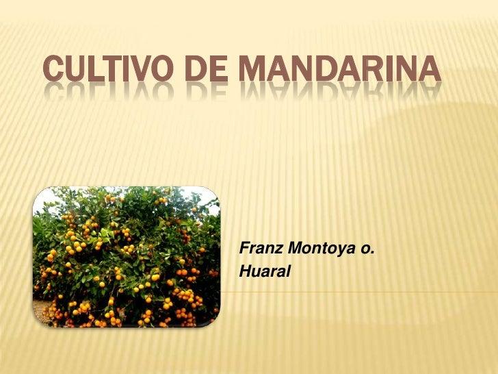 CULTIVO DE MANDARINA         Franz Montoya o.         Huaral