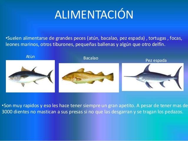 Tibur n blanco for Peces alimentacion