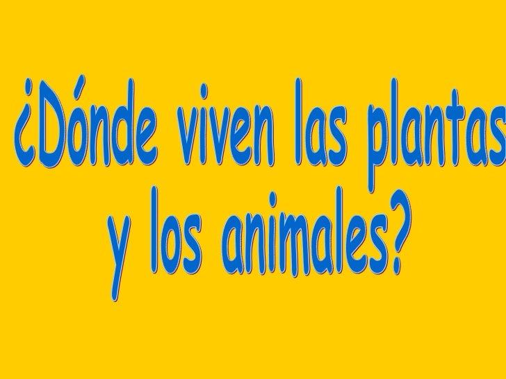 ¿Dónde viven las plantas  y los animales?