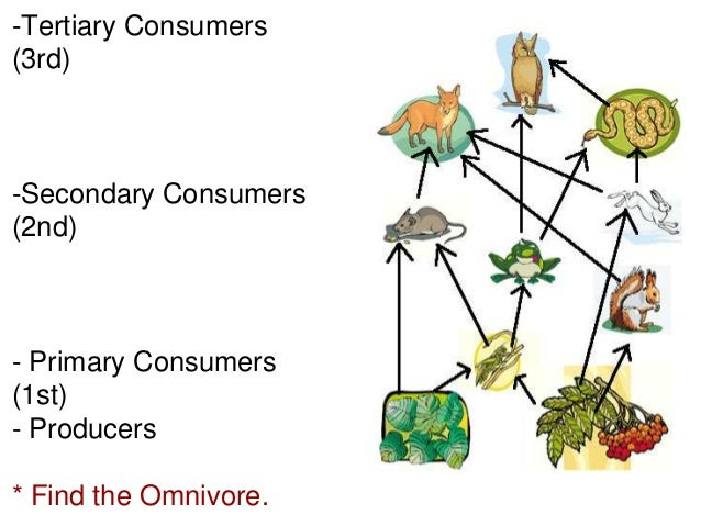 Power Point Ecology Activity Biology Corner on Will You Define Food Chain Web And