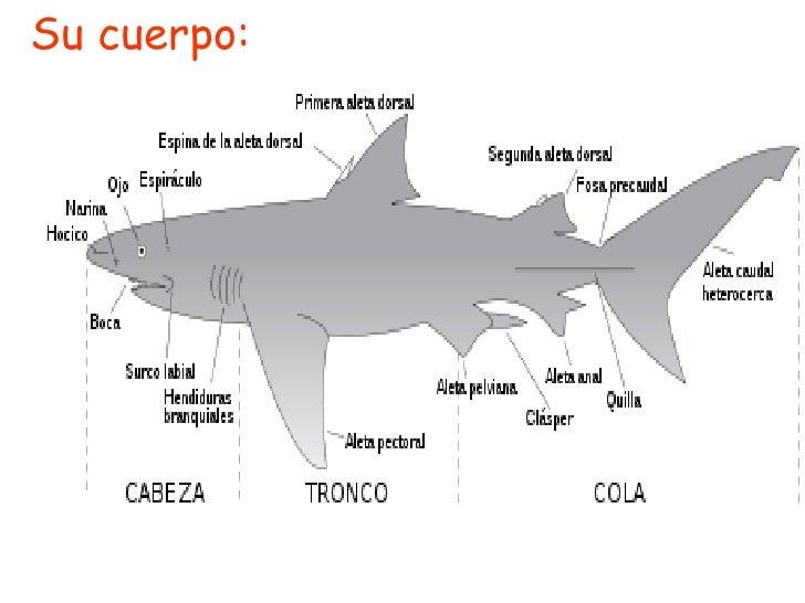 Powerpoint (el tiburón)