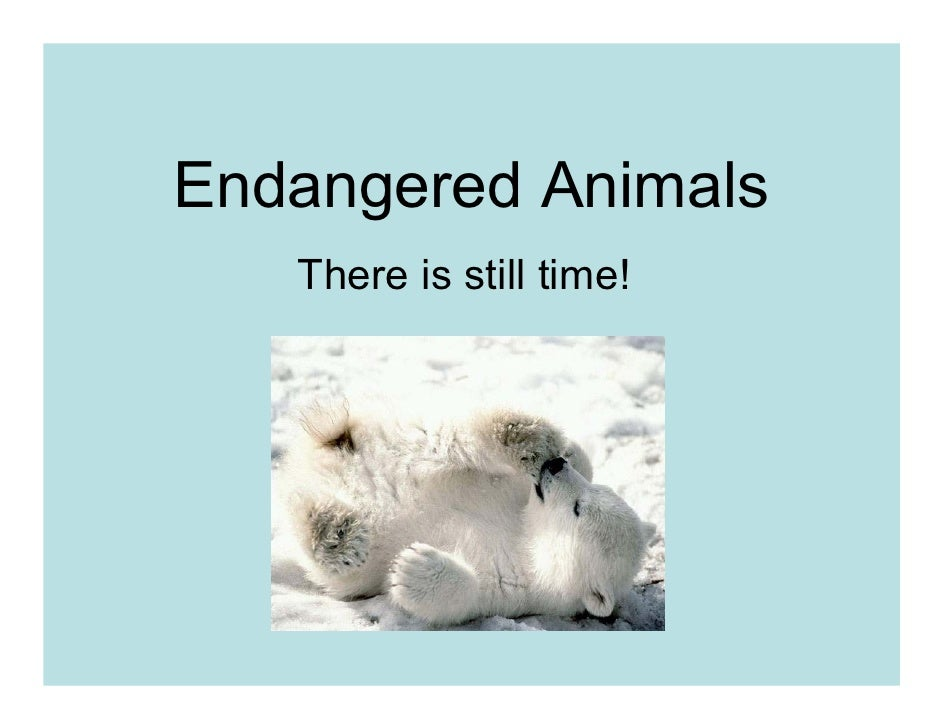 Endangered Animals    There is still time!