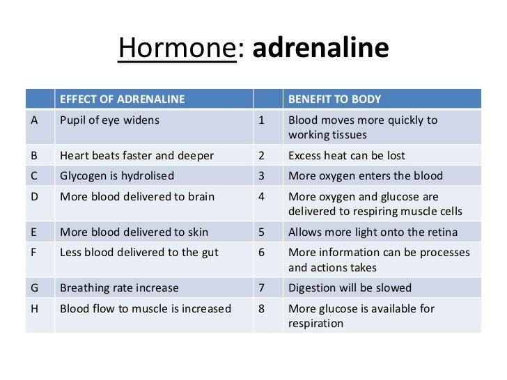 Powerpoint endocrine system hormone adrenalinebr toneelgroepblik Gallery