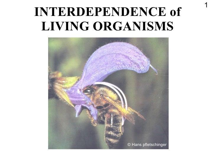 INTERDEPENDENCE of LIVING ORGANISMS 1 © Hans pfletschinger