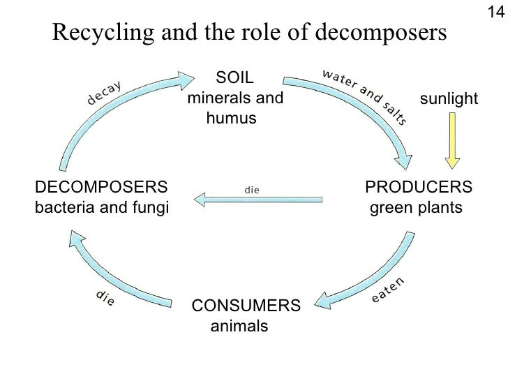 Food Chain Decomposer Organisms
