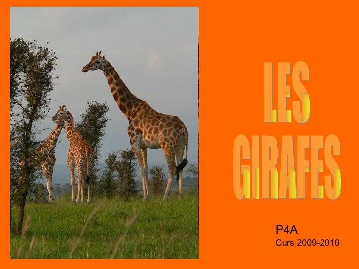 LES  GIRAFES P4A Curs 2009-2010