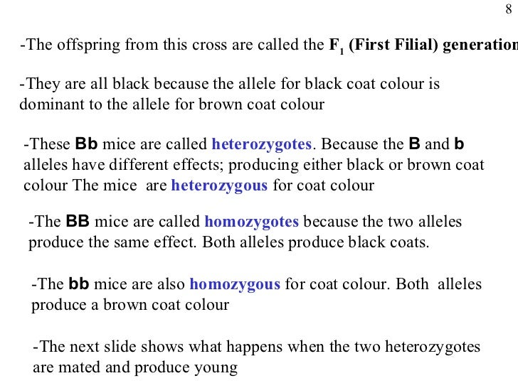 The allele for black coat is recessive