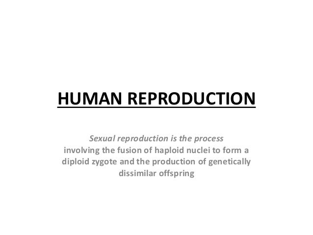 HUMAN REPRODUCTION Sexual reproduction is the process involving the fusion of haploid nuclei to form a diploid zygote and ...