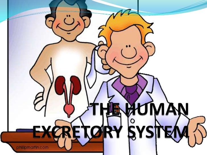 Excretory System is a passive biological system that removes excess, unnecessary materials from an organism, so as to hel...