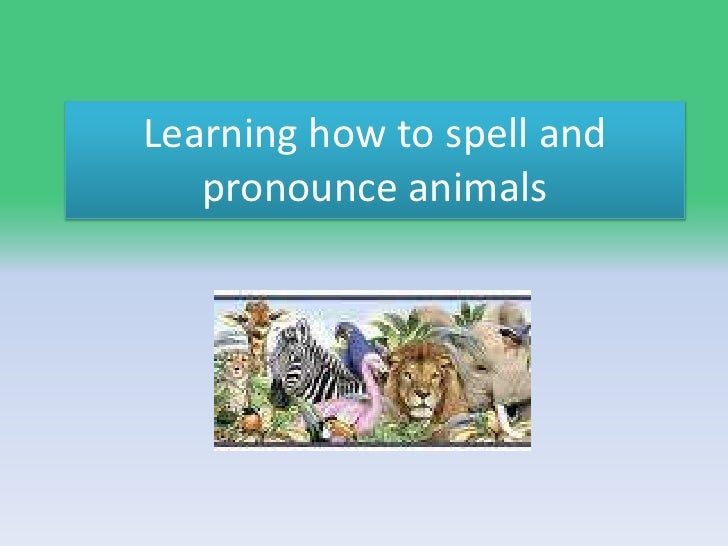 Learning how to spell and pronounce animals<br />