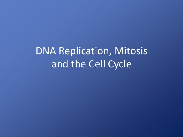 DNA Replication, Mitosis and the Cell Cycle