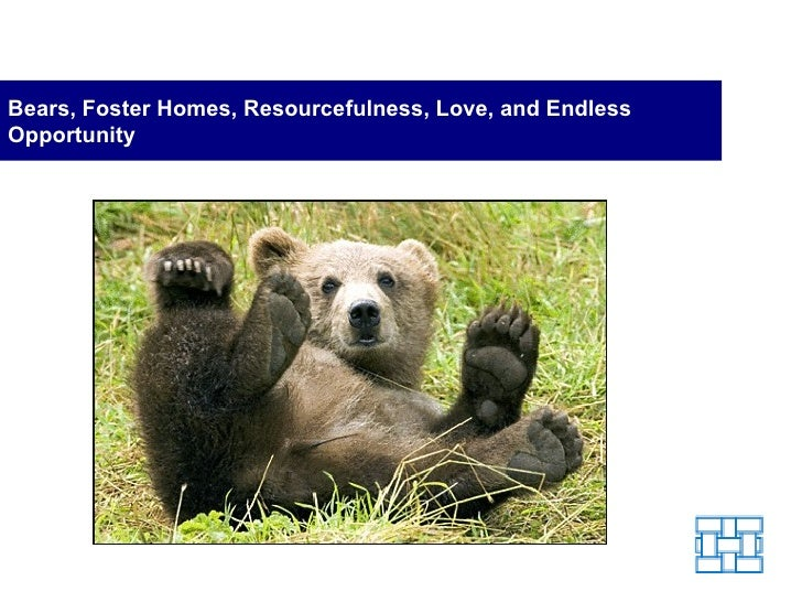 Bears, Foster Homes, Resourcefulness, Love, and Endless Opportunity