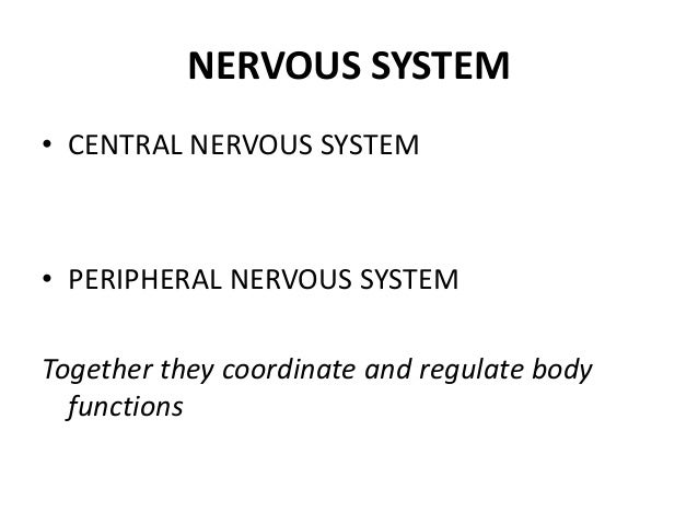 NERVOUS SYSTEM• CENTRAL NERVOUS SYSTEM• PERIPHERAL NERVOUS SYSTEMTogether they coordinate and regulate body  functions
