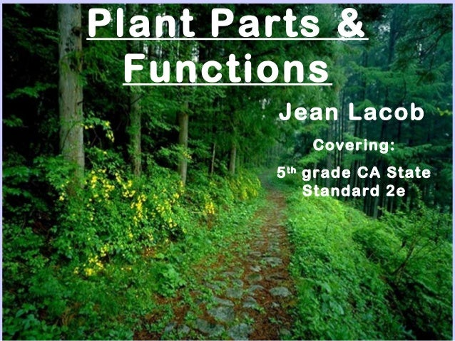 Plant Parts & Functions Jean Lacob Covering: 5th grade CA State Standard 2e